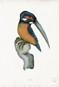 Kingfisher - artist signed print